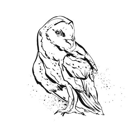 Hand getrokken vector abstracte grafische uilillustratie in zwart-witte die kleuren op witte achtergrond worden geïsoleerd. Het uil van de uil het schilderen drukontwerp. Zo en de illustratie van de het wildvogel.