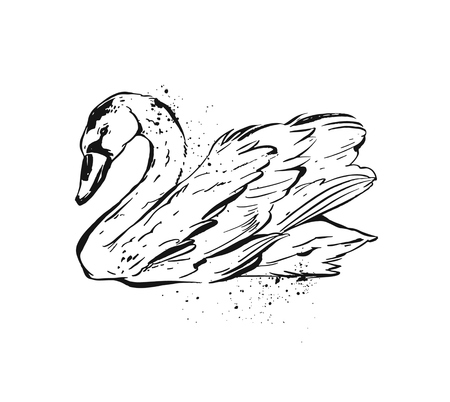 Hand drawn vector abstract ink painted textured graphic swan illustration isolated on white background.Vintage bird drawing illustration.Rough brush sketch of wild bird.
