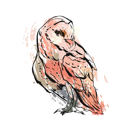 Hand drawn vector abstract graphic textured owl illustration in pastel colors isolated on white background.Boho owl painting print design.Zoo and wildlife bird illustration.