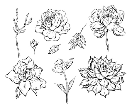 Hand drawn vector abstract graphic ink flowers collection set with rose, brunches, peony, cacti succulent isolated on white background. Outline design elements for boho wedding, birthday, save the date card.