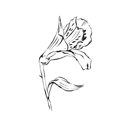 Hand drawn vector abstract artistic ink textured graphic sketch drawing illustration of lilly flower isolated on white background
