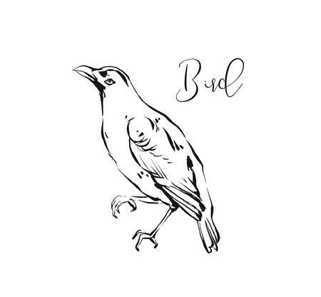 Hand drawn vector abstract artistic ink textured graphic sketch drawing illustration of forest bird isolated on white background. Illustration