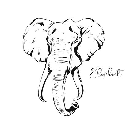 Hand drawn vector abstract artistic ink textured graphic sketch drawing illustration of wildlife indian elephant head isolated on white background Ilustração