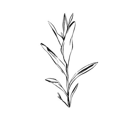 Hand drawn vector abstract artistic ink textured graphic sketch drawing illustration of rustic spring suculent flower branch plant isolated on white background