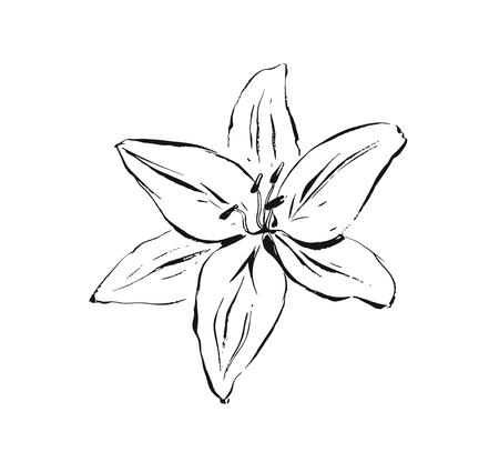 Hand drawn vector abstract artistic ink textured graphic sketch drawing illustration of lilly plant flower isolated on white background Ilustração