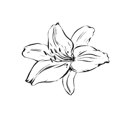 Hand drawn vector abstract artistic ink textured graphic sketch drawing illustration of lilly plant flower isolated on white background Иллюстрация
