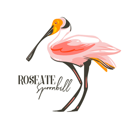 Hand drawn vector abstract cartoon summer time graphic decoration illustrations art with exotic tropical rainforest Roseate Spoonbill bird isolated on white background Stock Photo