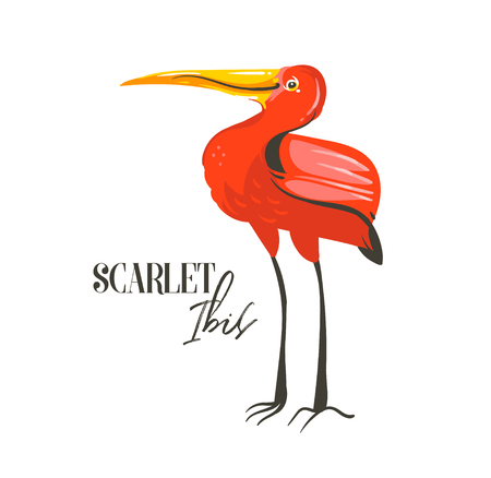 Hand drawn vector abstract cartoon summer time graphic decoration illustrations art with exotic tropical rainforest Scarlet Ibis bird isolated on white background