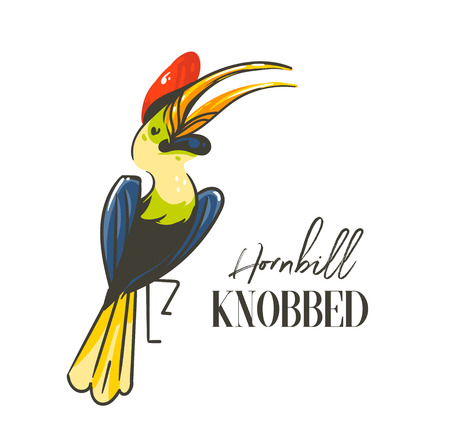 Hand drawn vector abstract cartoon summer time graphic decoration illustrations art with exotic tropical rainforest Hornbill Knobbed bird isolated on white background