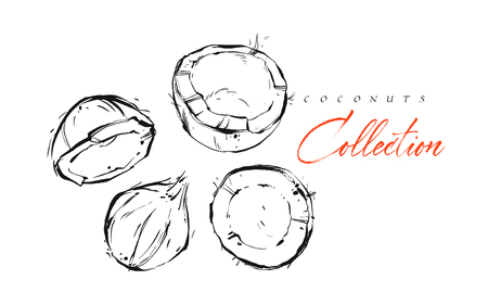 Hand drawn vector abstract exotic graphic ink textured tropical fruits coconuts illustrations collection set sketch drawing isolated on white background.Healthy lifestyle concept