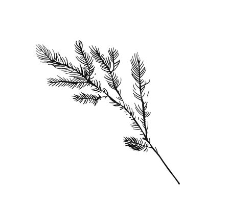 Hand drawn vector Merry Christmas rough freehand graphic greeting decoration design element with ink scandinavian Christmas tree branch isolated on white background.