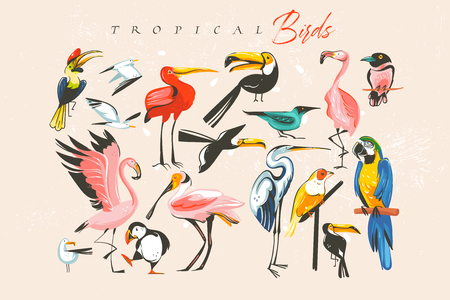 Hand drawn vector abstract cartoon summer time fun big bundle group collection illustrations set with tropical exotic zoo or wildlife birds isolated on white background. Standard-Bild - 113557906