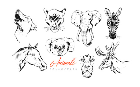 Hand drawn vector abstract artistic ink textured graphic sketch drawing illustrations collection set bundle of animals zebra, lion,koala,wolf,horse and deer heads isolated on white background