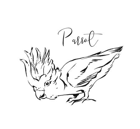 Hand drawn vector abstract artistic ink textured graphic sketch drawing illustration of tropical exotic parrot isolated on white background.