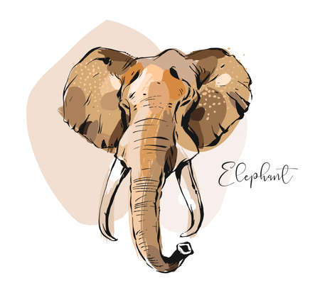 Hand drawn vector abstract creative graphic artistic illustrations collage with sketch elephant head drawing isolated on white background