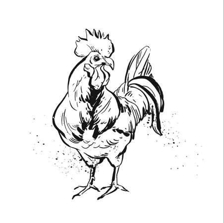 Hand drawn vector graphic ink rooster sketch illustration isolated on white background Vektorgrafik