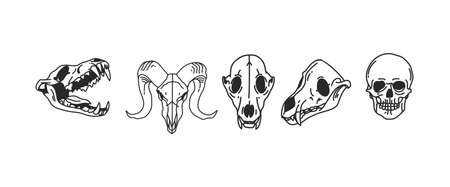 Hand drawn vector abstract stock flat graphic illustrations collection set with   element of magic skulls of animals and human,line art in simple style for branding,isolated on white background