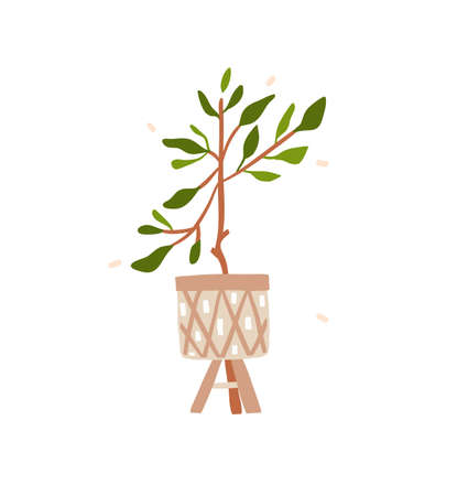 Hand drawn vector abstract stock graphic bohemian clipart illustration with beauty,urban home scandinavian interior design element of green plant in pot isolated on white background