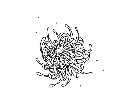 Hand drawn vector abstract stock flat graphic illustration with   element of line silhouette flower art of chrysanthemum in simple style for branding,isolated on white background Illustration