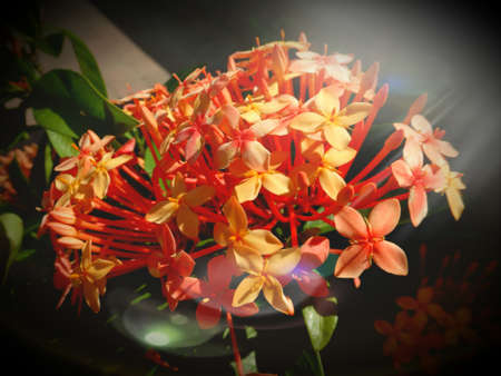 Beautiful flowers  from home gardening