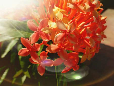 mountainous: Beautiful flowers  from home gardening