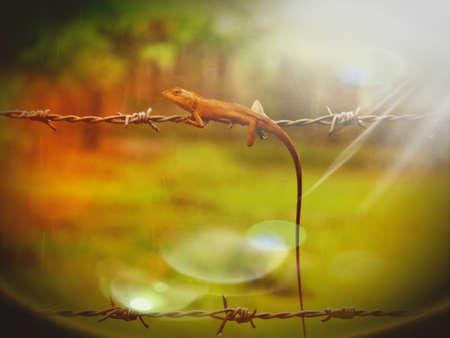 chic: Chameleon on the parkland Stock Photo