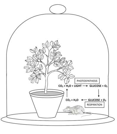 Priestley Experiment of Photosynthesis