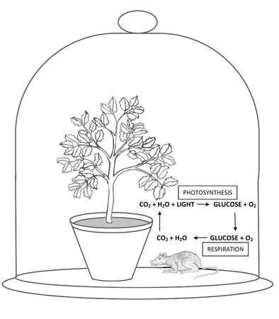 dioxido de carbono: Priestley Experimento de la fotosíntesis Foto de archivo