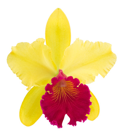 cattleya orchid: Flower cattleya orchid isolated on a white background Stock Photo