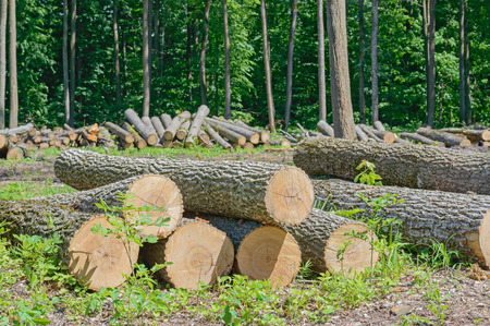felled: Felled timber on the felled area Stock Photo