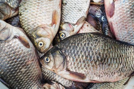 crucian: Fresh raw fish crucian (river carp) closeup Stock Photo