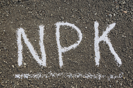 nitrogen: NPK letters made of composite mineral fertilizers on the black soil background. N - nitrogen, P - phosphorus, K - potassium (kalium)