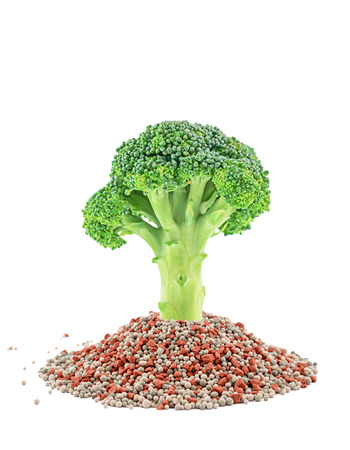 Green broccoli closeup on the mineral fertilizers. Isolated on the white background Stock Photo