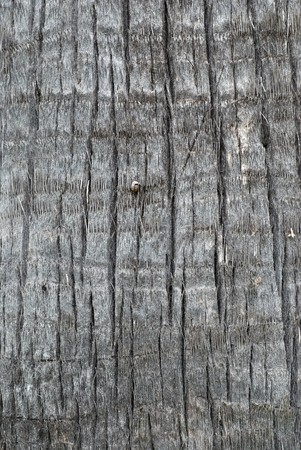 ruggedness: Palm tree trunk texture Stock Photo
