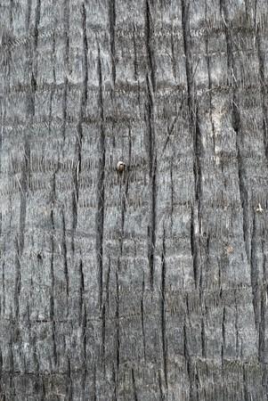 ruggedness: Palm tree trunk trama  Archivio Fotografico