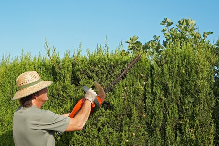 pruning: Gardener pruning a hedge with an electric pruner