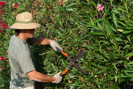 Pruning a hedge photo