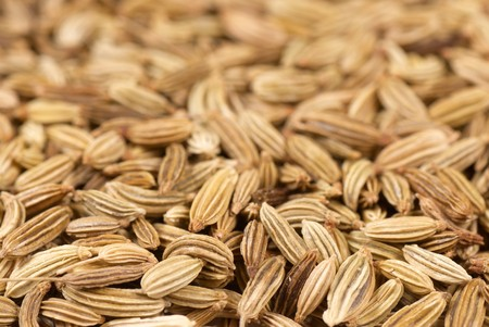 fennel seeds: Background of fresh fennel seeds with selective focus