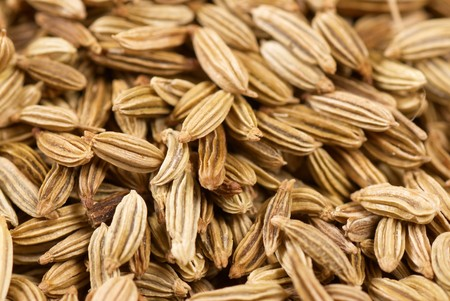 fennel seeds: Closeup take of fennel seeds, food background
