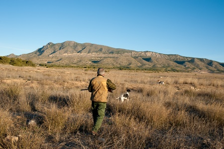 Quail hunter in camouflage clothing walking across the field Imagens