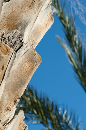 ruggedness: Closeup take of a palm tree trunk texture