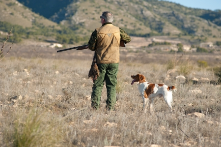 Quail hunter in camouflage clothing walking across the field Stock Photo