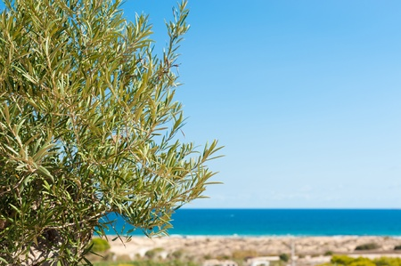 Olive tree branches against the beautiful background of the Mediterranean photo