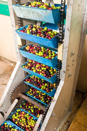 Detail of an olive processing plant, product being moved into the mill