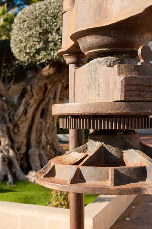 Old oil press against the background of a centennial olive tree photo