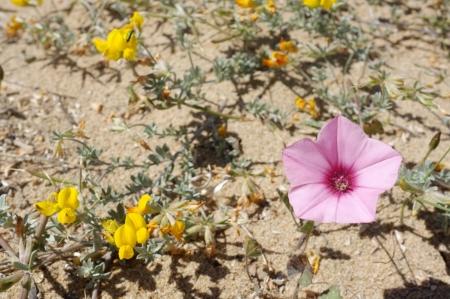 suelo arenoso: Los colores de primavera en un suelo escaso, arena