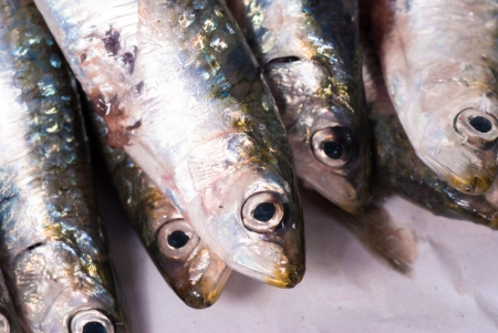 bluefish: Fresh sardines waiting to be cooked