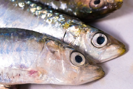 bluefish: Raw sardines, a Mediterranean bluefish classic Stock Photo