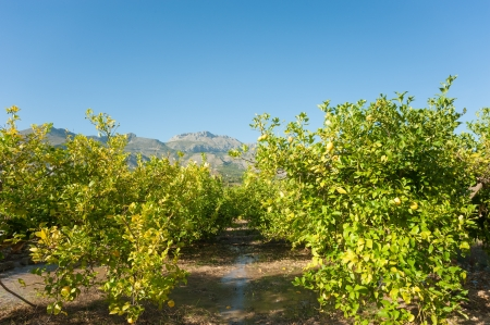Watering through flooding, traditional Mediterranean agriculture Stock Photo