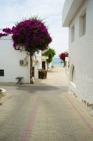 whitewashed: Quiet street of a traditional whitewashed Andalusian village